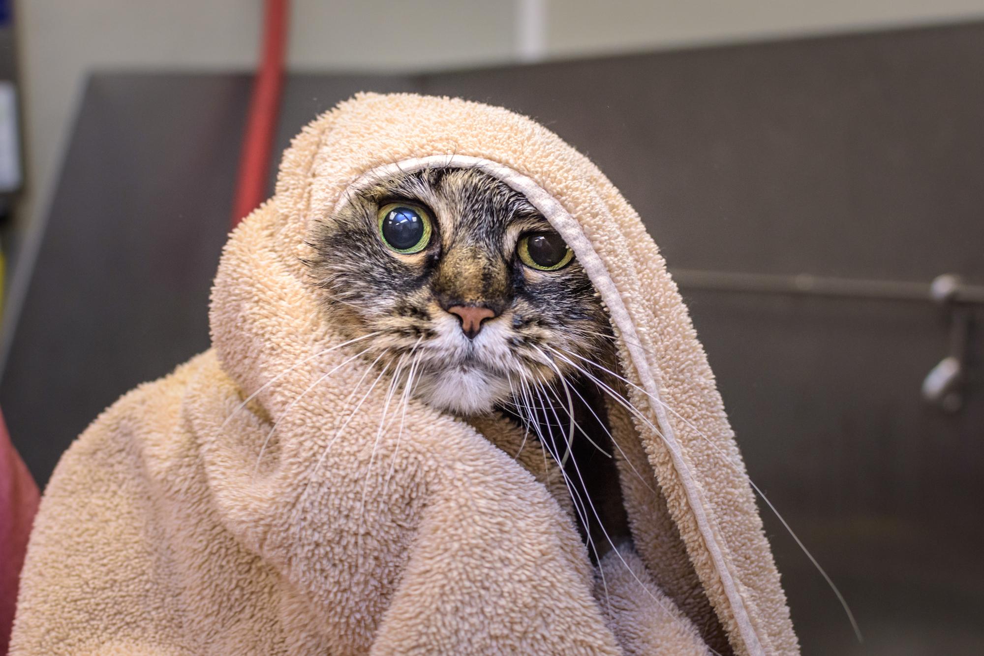 2017-02-Cat-Grooming-Pics-3
