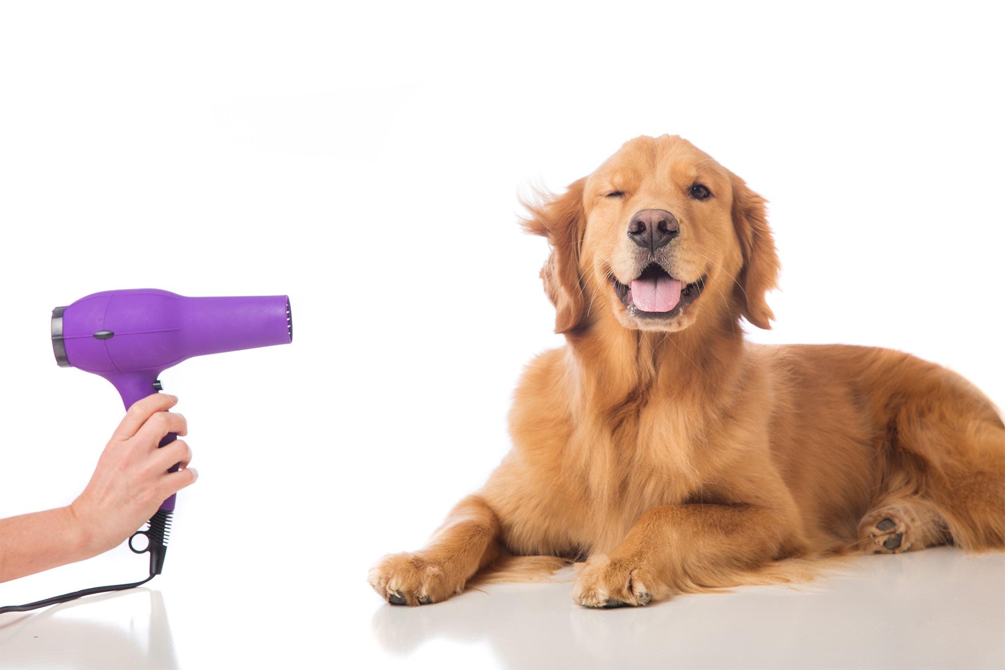 Peluqueria-canina-felina