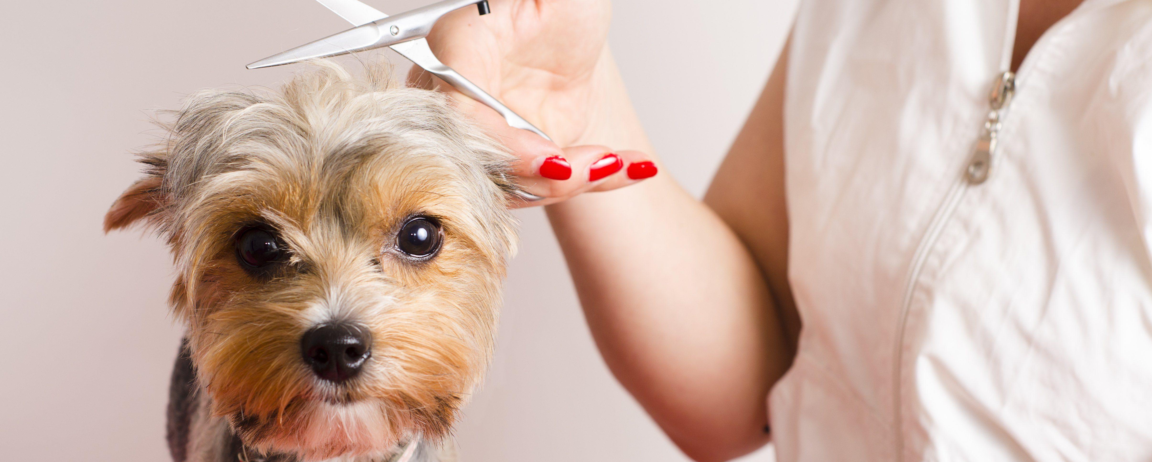 donde-estudiar-peluqueria-canina