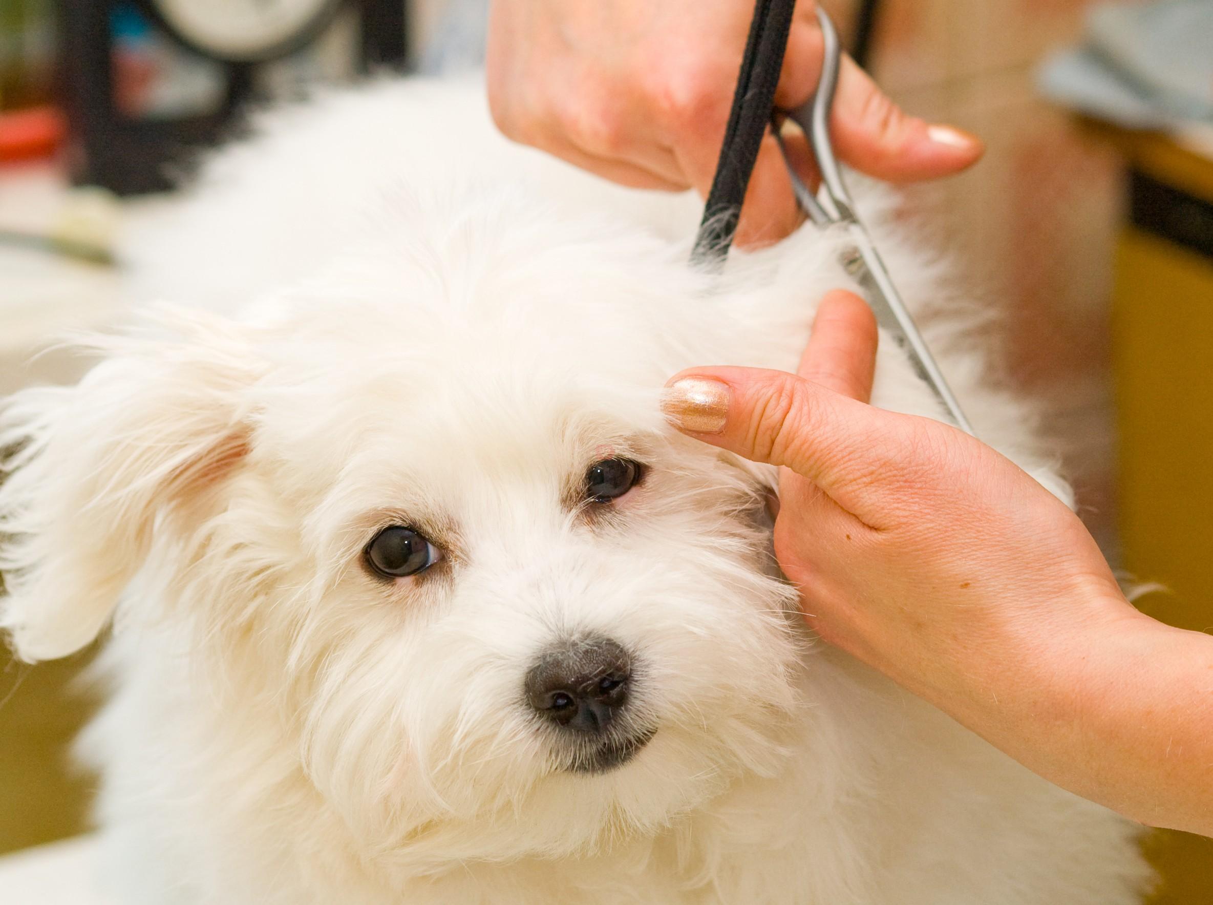 peluqueria-canina-2