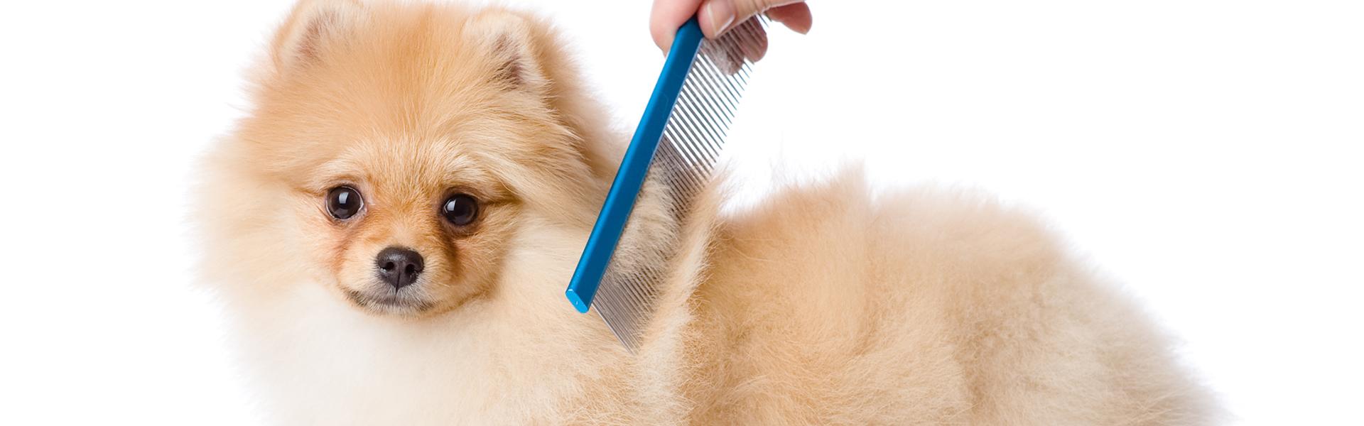 peluqueros-caninos-toledo